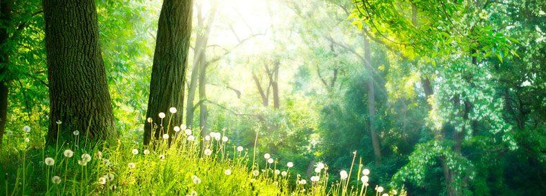 Blog: Nature Spirits