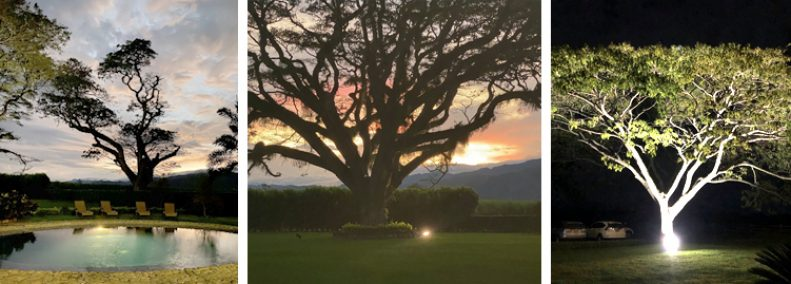Blog: Trees That I Have Known